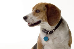 Puppy Profile Royalty Free Stock Images