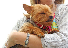 Puppy protection Royalty Free Stock Photo