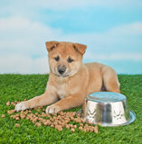Puppy Proublems Royalty Free Stock Image