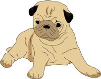 Puppy pug. An illustration of a small brown puppy pug Royalty Free Stock Photography