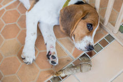 Puppy. Punish naughty puppy By imprisoned in a cage stock photography