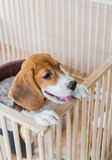 Puppy. Punish naughty puppy By imprisoned in a cage stock images