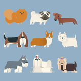 Puppy Pure Breed Exhibition Dog vector illustration
