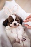 Puppy with rabbit Stock Photos