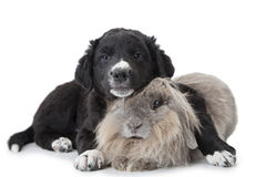 Puppy and rabbit isolated on white Stock Photos