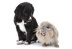 Puppy and rabbit over white Royalty Free Stock Photo