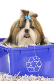 Puppy in recycle bin. Adorable shih tzu sitting in recycle bin on white background Stock Photo