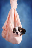 Puppy resting in a hammock Stock Image