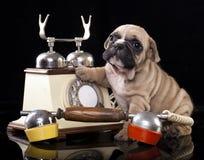 Puppy and retro phone Royalty Free Stock Photos