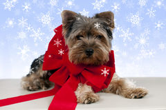 Puppy ribbon snow Royalty Free Stock Photography