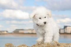 Puppy on the rocks Stock Image