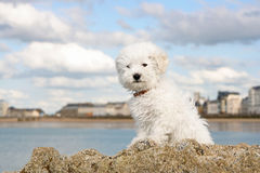 Puppy on the rocks Royalty Free Stock Images
