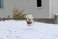 puppy running Arkivfoto