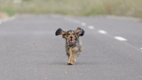 Puppy running down a road Stock Photo