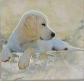 Puppy& x27; s金黄世界 免版税库存图片