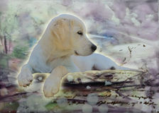 Puppy's Purple World. White English Cream Golden Retriever puppy sitting a landscape of colors, purple, gold, green, blue and brown royalty free illustration