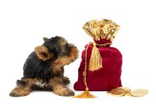 Puppy and sack Stock Image