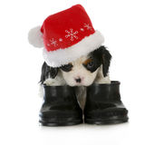 Puppy santa Stock Images
