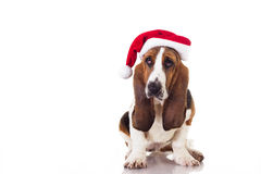 Puppy with Santa Claus hat Royalty Free Stock Photo