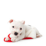 Puppy with santa hat Stock Image