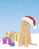 Puppy in a santa hat Royalty Free Stock Photos