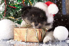 Puppy in santa  hat Stock Images