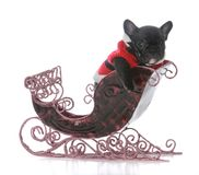 Puppy in santa's sleigh. French bulldog puppy in santa's sleigh on white background Royalty Free Stock Image
