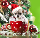 Puppy in Santa's hat Royalty Free Stock Images