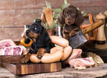 puppy and sausages and meat royalty free stock images