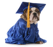 Puppy school Royalty Free Stock Images