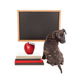 Puppy at School Blank Chalkboard Royalty Free Stock Photo