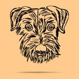 Puppy. Scotch terrier Stock Photos