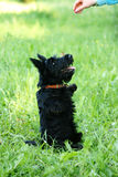 Puppy scottish in park Royalty Free Stock Photos