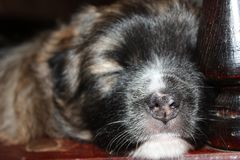 Puppy second week is sleeping. close-up stock image
