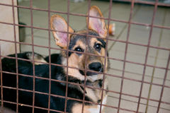 Puppy in a shelter for homeless dogs Royalty Free Stock Images