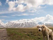 Puppy shepherd dog Royalty Free Stock Photography