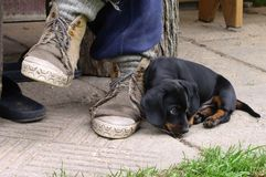 Puppy and Shoes. A black puppy and very old shoes royalty free stock photo