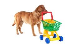 Puppy shopping Royalty Free Stock Photo
