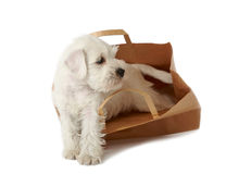 Puppy in a shopping bag royalty free stock photos
