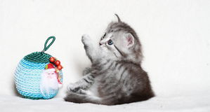 Puppy of siberian cat with Christmas ball Royalty Free Stock Photos