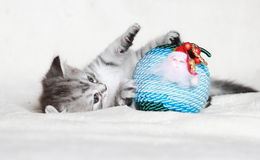 Puppy of siberian cat with Christmas ball Royalty Free Stock Images