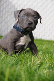 Puppy sit Royalty Free Stock Images