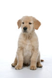 Puppy sitting Stock Images