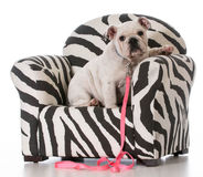 Puppy sitting in chair Stock Photography
