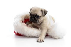 Puppy sitting on christmas hat Royalty Free Stock Photography