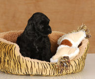 Puppy sitting in dog bed Stock Photo