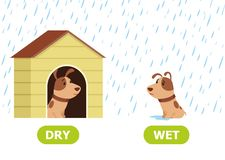 The puppy is sitting in a doghouse and outside in the rain. Illustration of opposites dry and wet. stock illustration