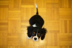 Puppy sitting on the floor stock photography