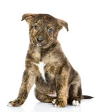 Puppy sitting in front. looking at camera. Royalty Free Stock Photography