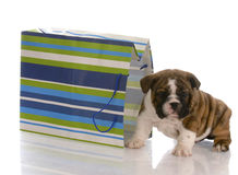 Puppy sitting beside gift bag Stock Image